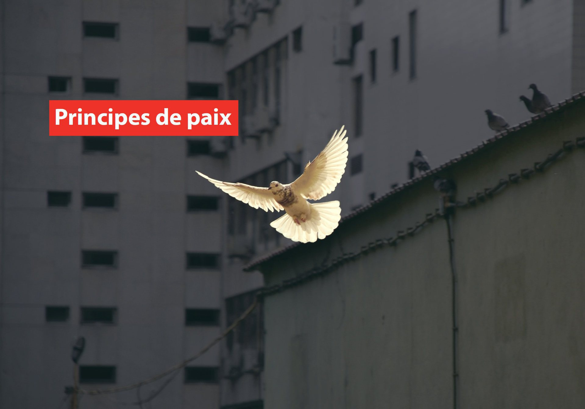 principes-de-paix-image